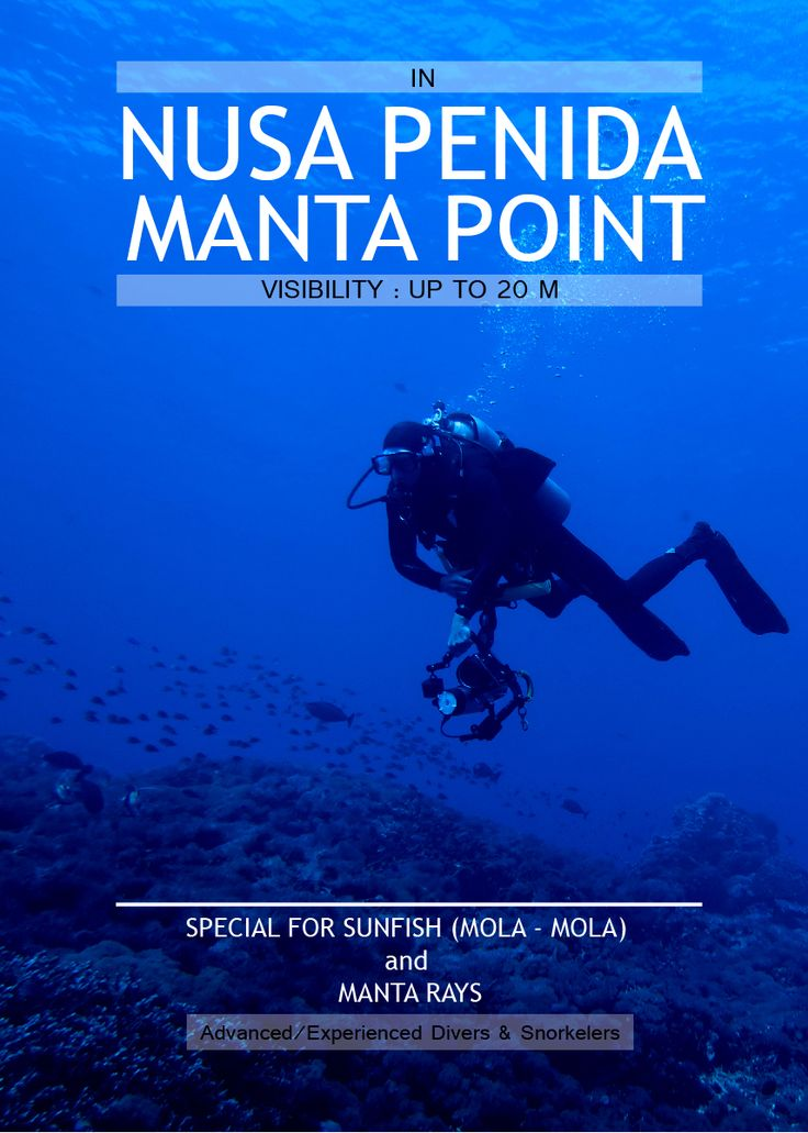 NUSA PENIDA MANTA POINT - Available space on 23rd , 25th and 28th of February. We can do any days with minimum book for 3 persons (diver). www.balidiving.com (0361-270791) #balidiving #nusapenida #mantapoint #diving #snorkeling #mantarays #crystalbay #lembongan
