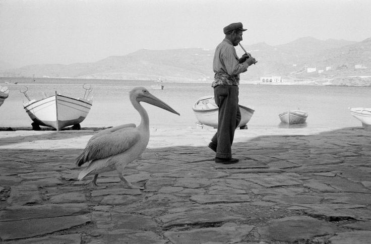 "#Pelican ""Petros"" walking with a flute player, Island of #Mykonos, #Greece, 1957.  René Burri  #black #white"
