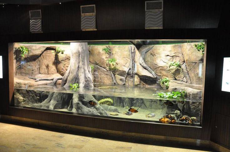 Amazonien Terrarium Vivarium Paludarium Aquarium Wabi