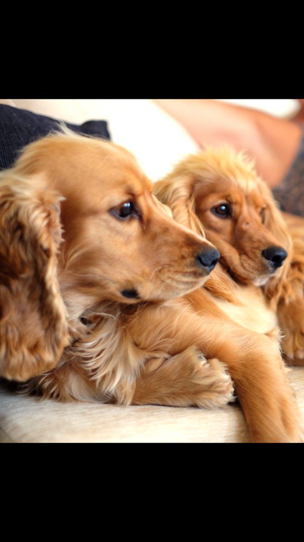 Siblings Kaya & Honey