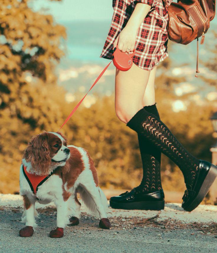#fall #autumn #hotchocolate #cupcake #pumpkin #love#ckcs #cavalier#dog #kimgcharles #socks