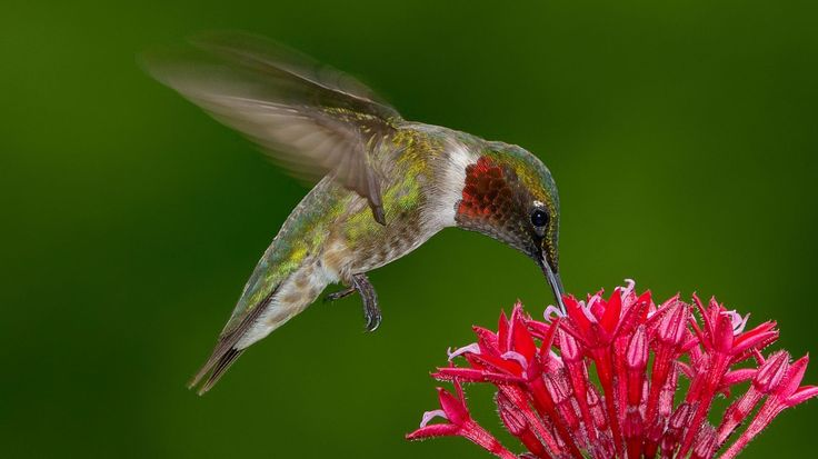 A Wildlife Rescue Is Begging People to Stop Buying Red Hummingbird Nectar