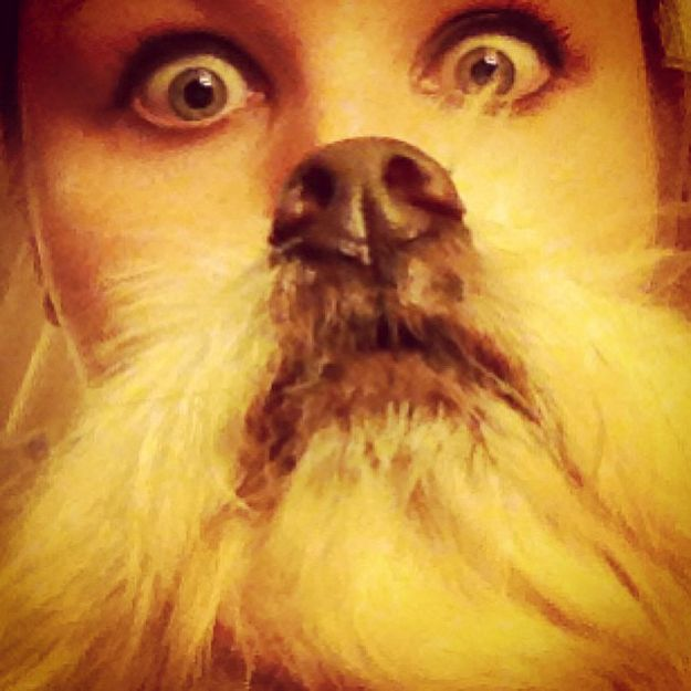 The 18 Most Epic Dog Beards Of All Time---For Those days when you Really need a Laugh