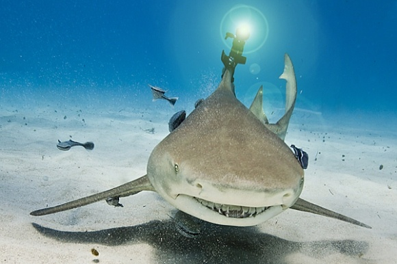 Sharks with laser beams! Dr. Evil would be proud!