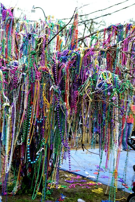 Mardi Gras Bead Tree! Probably in New Orleans. The ones I've seen here don't have nearly that many beads.