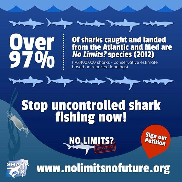 Help the Shark Trust stop uncontrolled shark fishing! Visit http://www.nolimitsnofuture.org/ #nolimitsnofuture #sharktrust