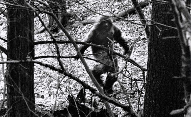 Does These Bigfoot Sightings Prove The Creature Is Real?