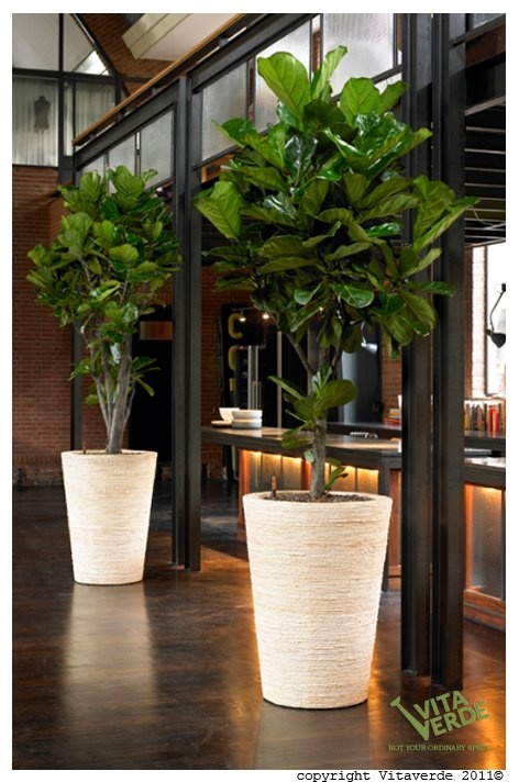 44 best images about plantas para interiores on pinterest for Plantas de interior oficina