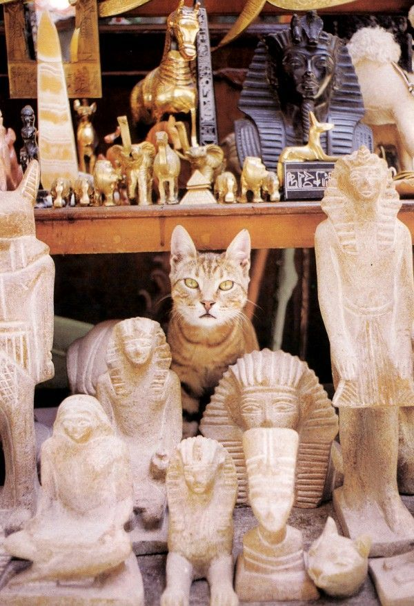 These 22 pictures of cats and kittens will make you want to visit Cairo in Egypt right Meow! See these Instagram-worthy pictures at http://www.traveling-cats.com/2018/01/cats-from-cairo-egypt.html