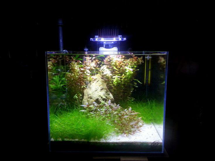 Acquario con piante illuminata da MINU' (20 Watt)  di SICCE