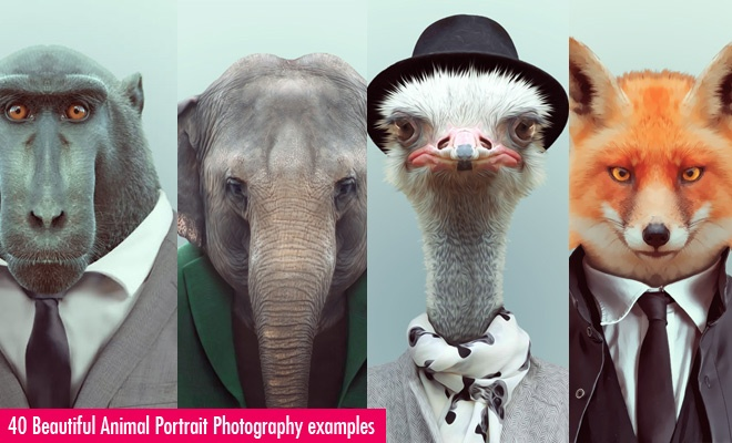 40 Beautiful Animal Portrait Photography examples - Zoo Por