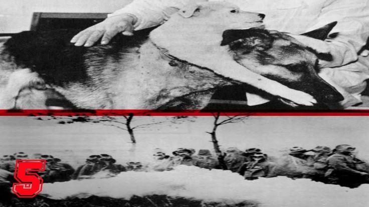5 scienziati pazzi più malvagi e crudeli della storia esperimenti umani esperimenti animali scienziati crudeli Guarda gli altri video di Pianeta Oscuro: 5 sp...