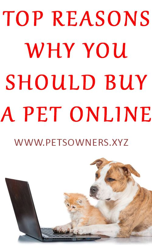 Top Reasons Why You Should Buy A Pet Online Pets Online Pets Budgies