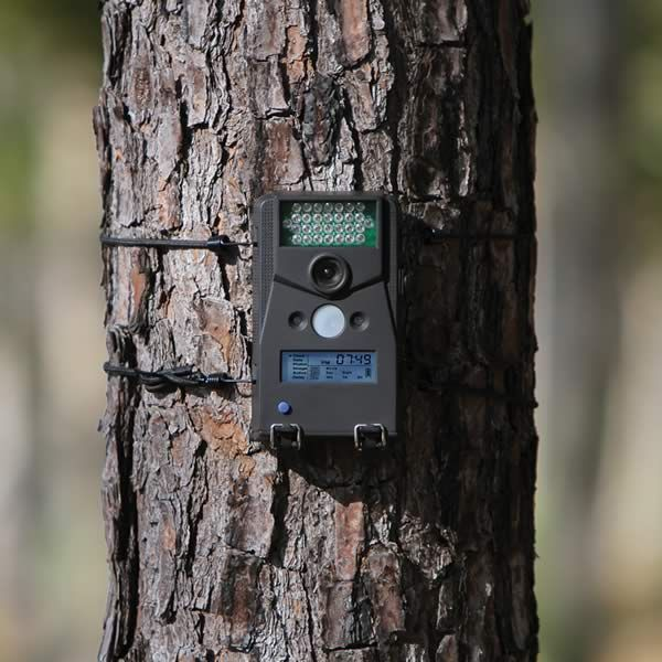 14 Best Images About Trail Camera On Pinterest Camera