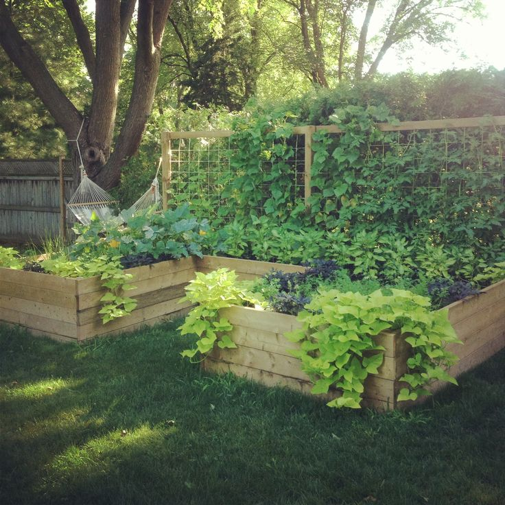 Vegetable garden, so want to do something like this when i get my own garden... I want vegetable, berries and fruit growing in my garden :)