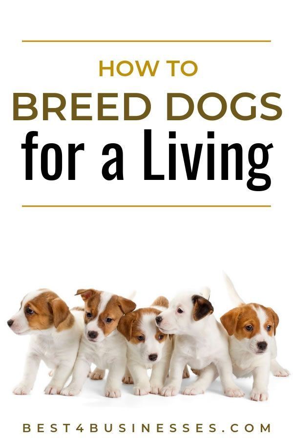 Best Dogs to Breed and Sell - Most Profitable Breeding Business ...