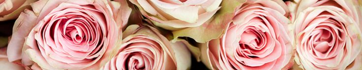 Mulch In The Rose Garden | All About Roses