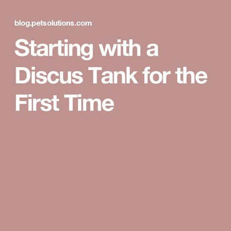 Starting with a Discus Tank for the First Time
