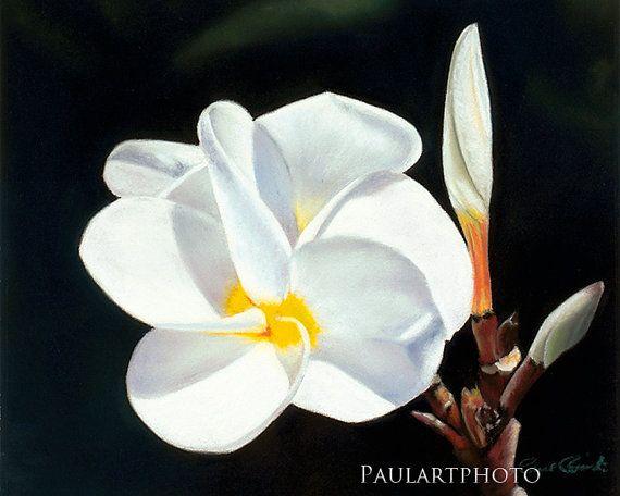 Plumeria Flower Inkjet Print Giclee by PRPhotographyAndArt on Etsy, $19.00