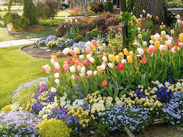 29 best images about front flower bed ideas on pinterest garden ideas flower bed designs and kale for Tulip garden in texas