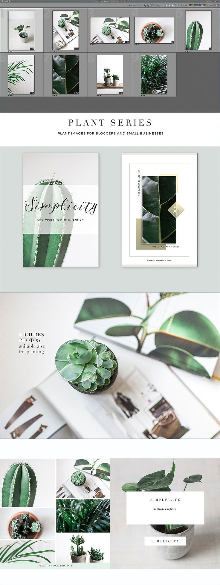 Plant series stock photos by Nellaino on @creativemarket
