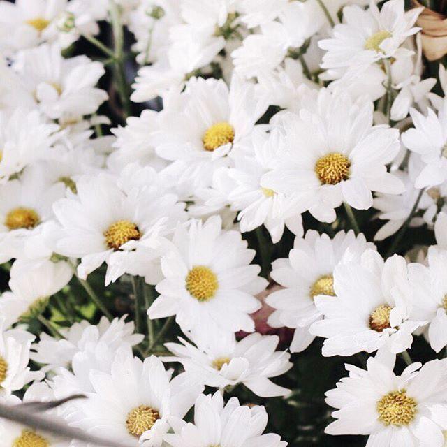 """""""- Mestre, como faço para não me aborrecer?  Algumas pessoas falam demais, outras são ignorantes.  Algumas são indiferentes.  Sinto ódio das que são mentirosas.  Sofro com as que caluniam. - Pois viva como as flores, advertiu o mestre. - Como é viver como as flores? - perguntou o discípulo.  Repare nestas flores, continuou o mestre, apontando lírios que cresciam no jardim.  Elas nascem no esterco, entretanto, são puras e perfumadas. Extraem do adubo malcheiroso tudo que lhes é útil e…"""