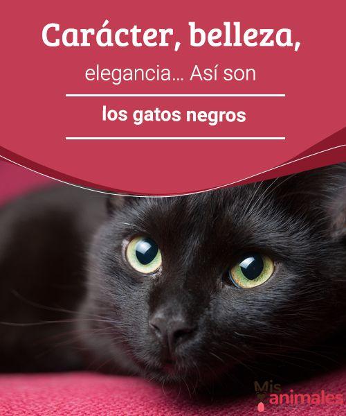 Carácter, belleza, elegancia… Así son los gatos negros.