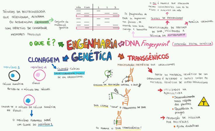 mapamental-biologia-engenharia-genetica-2016