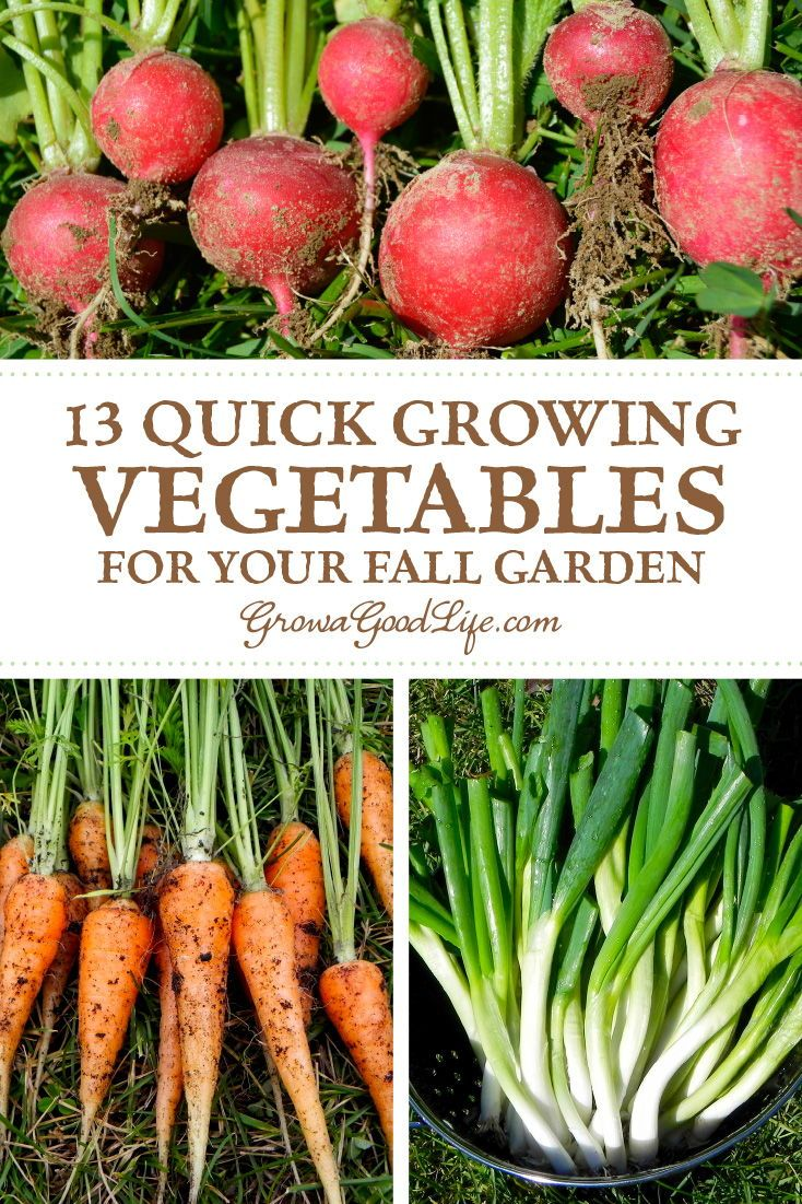 13 Quick Growing Vegetables For Your Fall Garden Autumn Garden