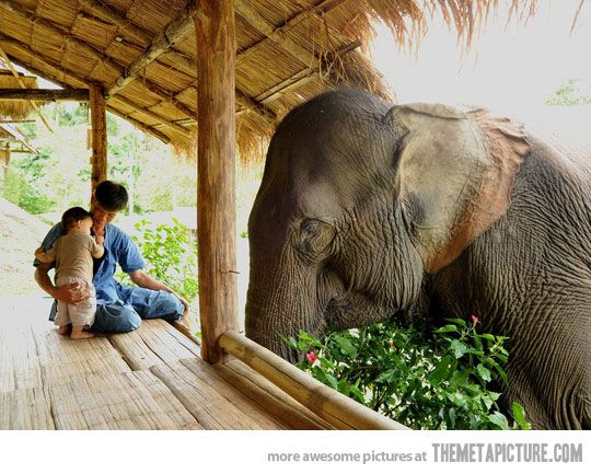 amazing: Elephants, Little One, Friends, Animal Photography, Sons, Pet, Thailand, Families, Gentle Giants