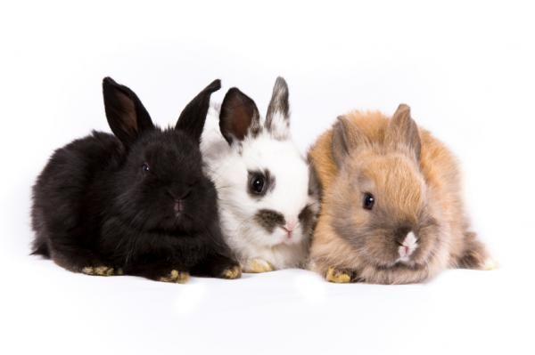 Nomes unissexo para coelhos