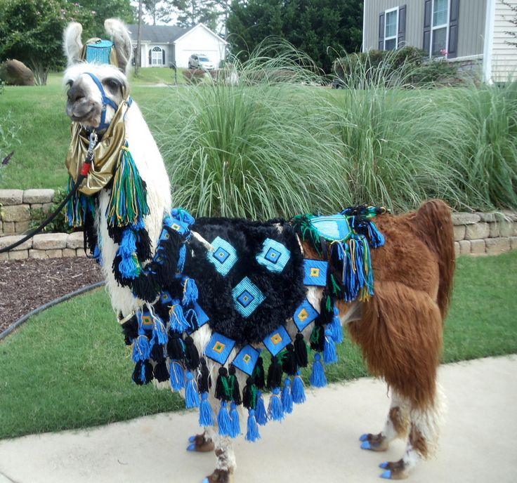 246 best Pi Llama Das images on Pinterest | Llamas, Adorable animals ...