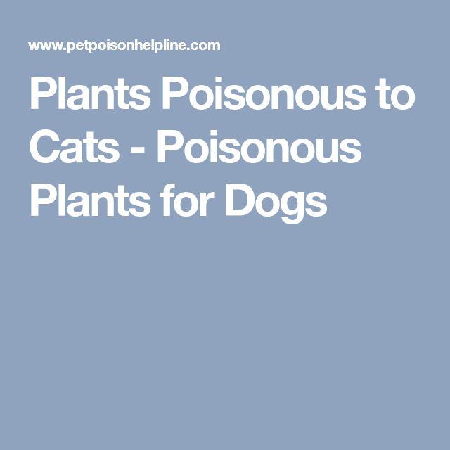 Plants Poisonous to Cats - Poisonous Plants for Dogs