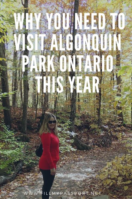 Are you looking for somewhere to travel in Canada this year? If so, you have to plan a trip to Algonquin Park in Ontario Canada. It offers beautiful landscapes, tons of wildlife, and incredible pictures. If you want to see it at its prettiest, you'll visit Algonquin Park in the fall. Come see why we love and recommend this park in Ontario and save it to your board so you can find it later. #algonquin #ontario #ontarioparks