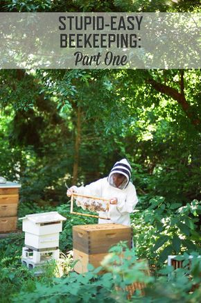 Stupid-Easy Beekeeping: Part 1   How to start keeping honeybees in your own backyard.   stupideasypaleo.com