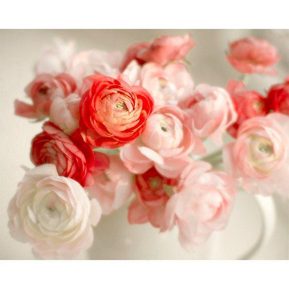 Red and Pink Ranunculus | semisweetstudios