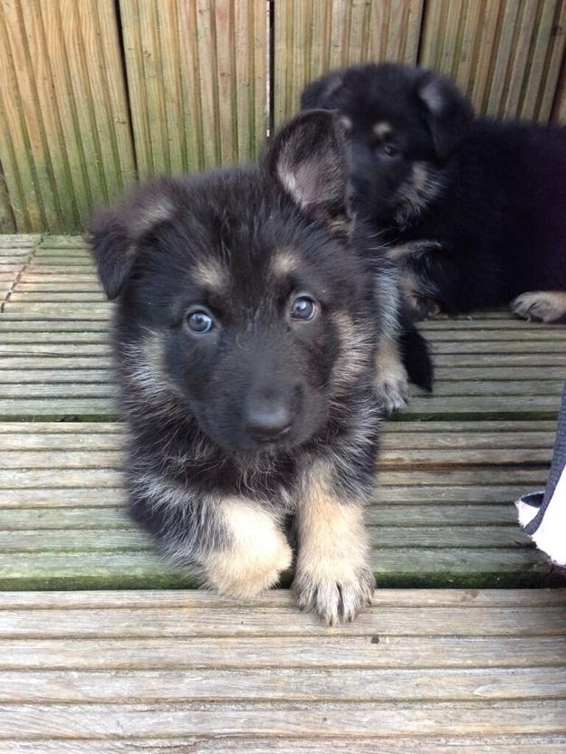 Meet The Painfully Cute Police Pups Who Are Coming To Arrest You. Cuteness overload.