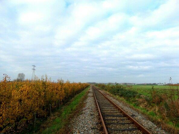 Herfst inde perebomen Zwaagdijk-west