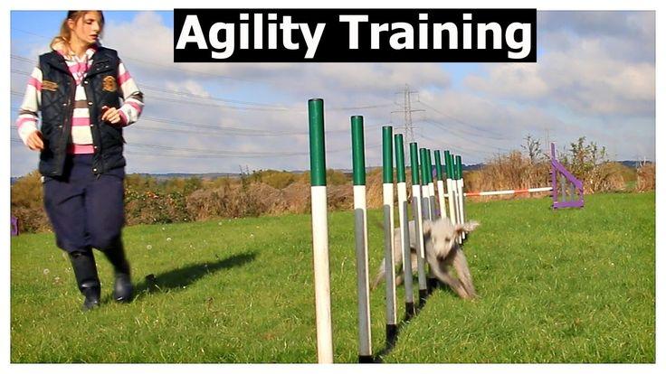 Agility training with my Bedlington Terrier - Clo bo vlog