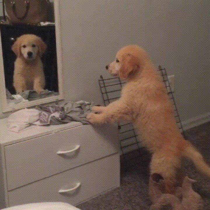 Who is that puppy in the mirror? http://ift.tt/2lACx7V