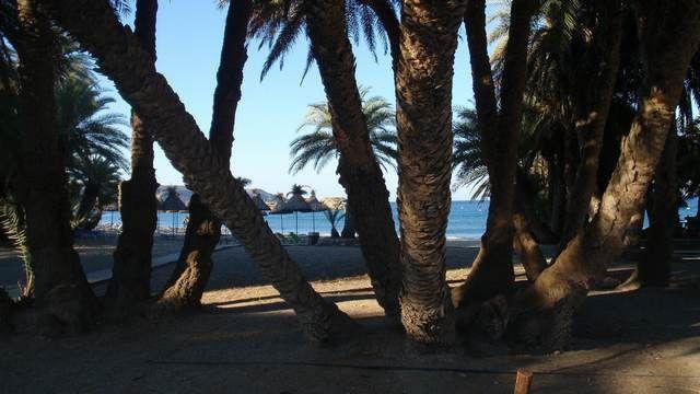 """Φοινικόδασος Βάϊ: Ένα από τα πιο """"μαγικά""""αξιοθέατα στην Κρήτη."""