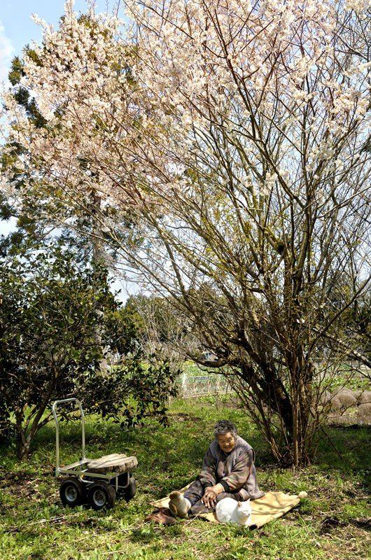 Miyoko Ihara has been taking photographs of her grandmother, Misao and her beloved cat Fukumaru since their relationship began in 2003. Their closeness has been captured through a series of lovely photographs. 11-26-12 / Miyoko Ihara