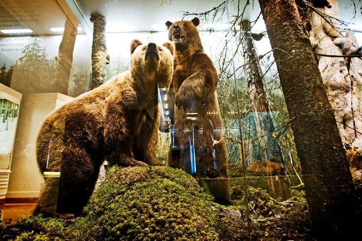 Luonnontieteellisessä museossa on viisi pysyvää näyttelyä: Suomen luonto, Maailman luonto, Elämän historia, Luut kertovat ja Muutosta ilmassa.