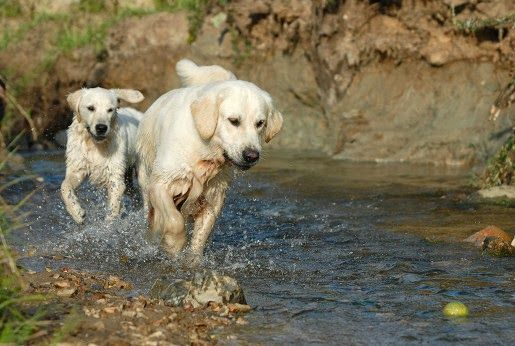Karmy dla psów aktywnych