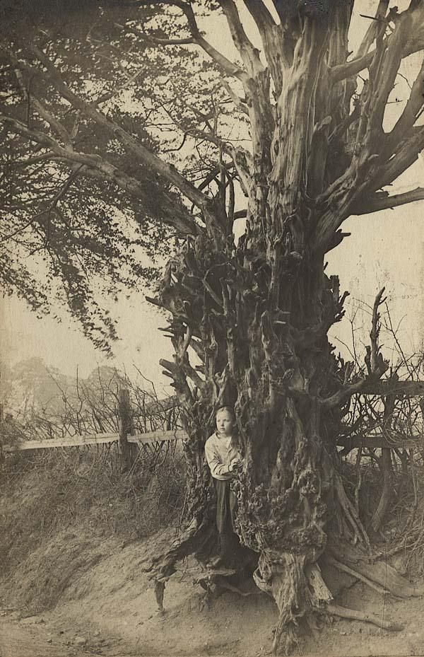 The Old Yew Tree on Rocky Lane, Perry Barr, 1898 - Photographer - Philip Whitehouse