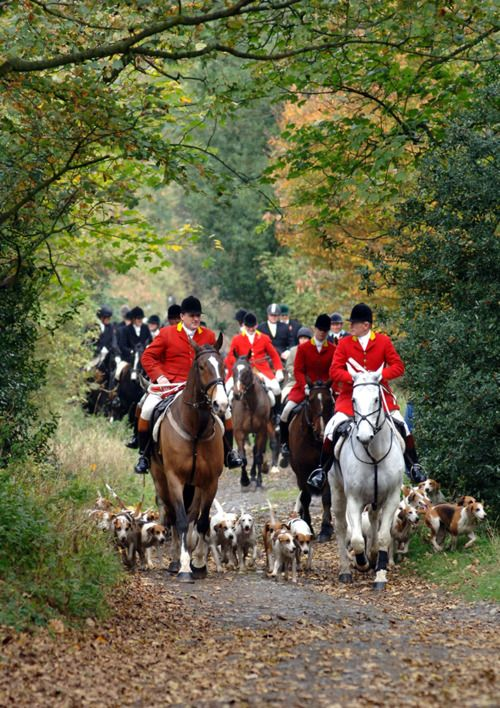 A fall fox-hunt.  Walked out our first hunt over Christmas break.  Edmund LOVED it!  Think this might be in the future.
