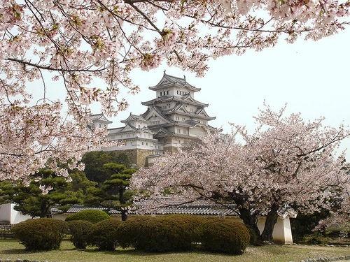#japan  #japan