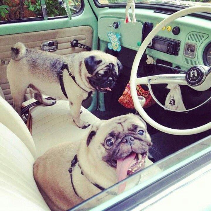 Cruiser Pugs