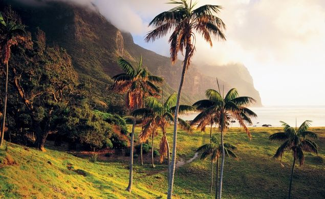 Lord Howe's native kentia palms, with views of two volcanic mountains: Mount Gower and Mount Lidgbird. (Tom Till/ Getty Images)