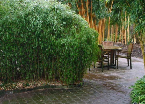 17 beste afbeeldingen over garden plants op pinterest riddersporen mediterrane tuin en planten. Black Bedroom Furniture Sets. Home Design Ideas